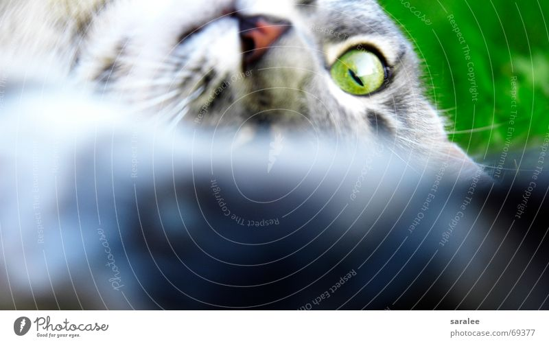 Cat Green Beautiful Animal Eyes Playing Grass Action Electricity Pelt Paw Snout Perfect Sharp Focal point Beard hair