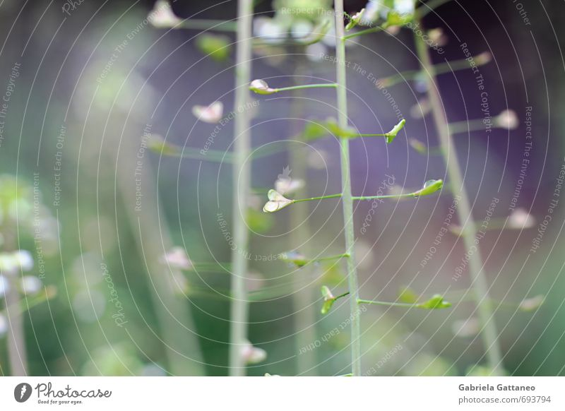 Herzensangelegenheiten Green Plant Meadow Violet Heart-shaped