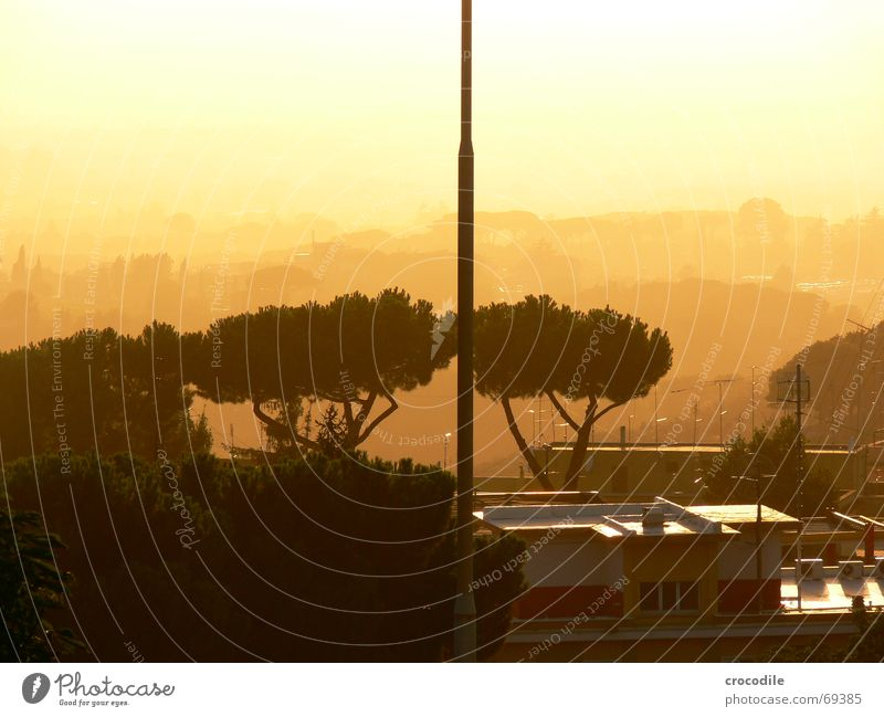 evening sun Tree Sunset House (Residential Structure) Italy Blur Fog Unclear Antenna met