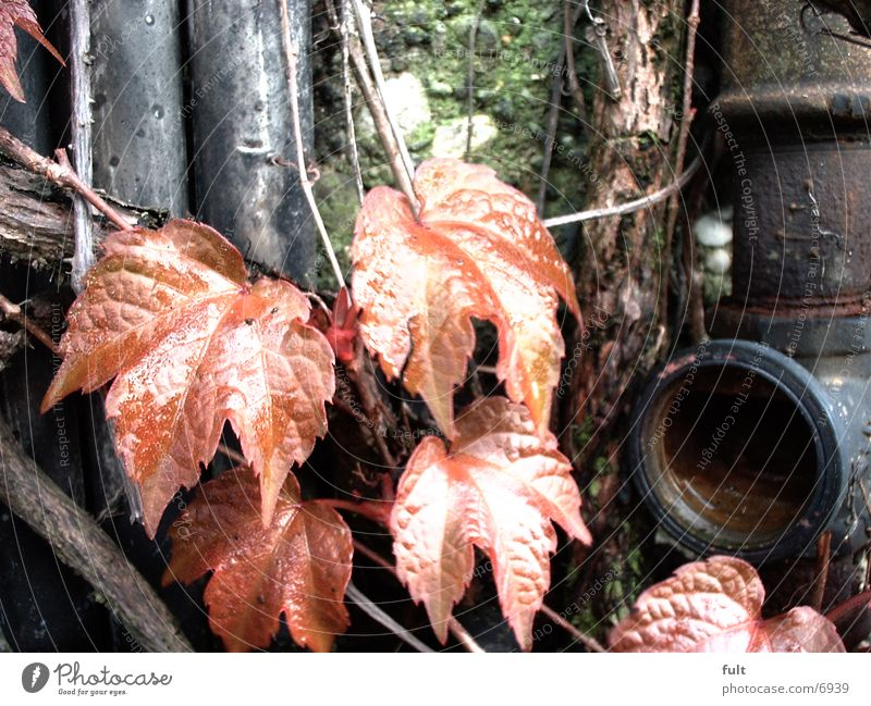 pipe Leaf Bushes Wall (building) Damp Things Rust Pipe