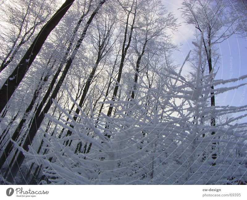 winter landscape I Snow hiking Winter Tree Forest Calm Relaxation Fir tree Sky blue Snowscape White Cold Illuminating Serene Whipped eggwhite Coniferous forest