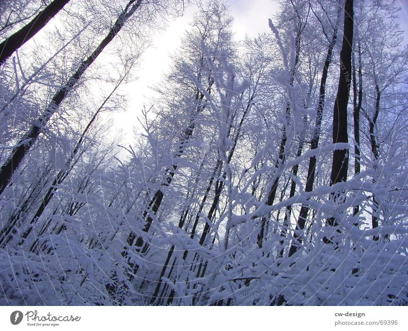 winter landscape II Clearing Winter Tree Forest Calm Relaxation Fir tree Sky blue Snowscape Snow hiking Illuminating Serene Whipped eggwhite Coniferous forest