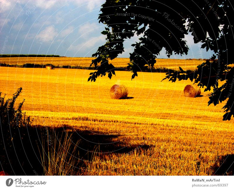 mid summer Cornfield Field Summer Hay bale Bale of straw Straw Tree Horizon Grain Harvest Shadow