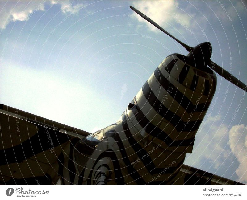 Sky Vacation & Travel Clouds Above Small Airplane Wind Flying Aviation Africa Leisure and hobbies Wing Airplane landing Zebra Expedition Propeller