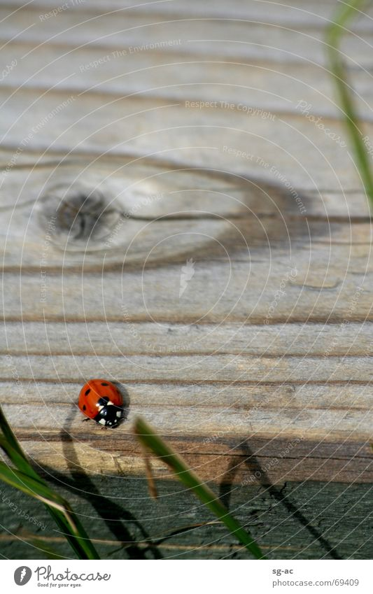Beetles in the High Fens Ladybird Eifel Wood Wood flour Grass Belgium Animal High Venn Wood grain