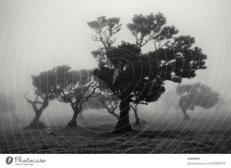refugees Nature Landscape Plant Sky Spring Weather Bad weather Fog Tree Grass Meadow Forest Black White absconding crouched Black & white photo Exterior shot