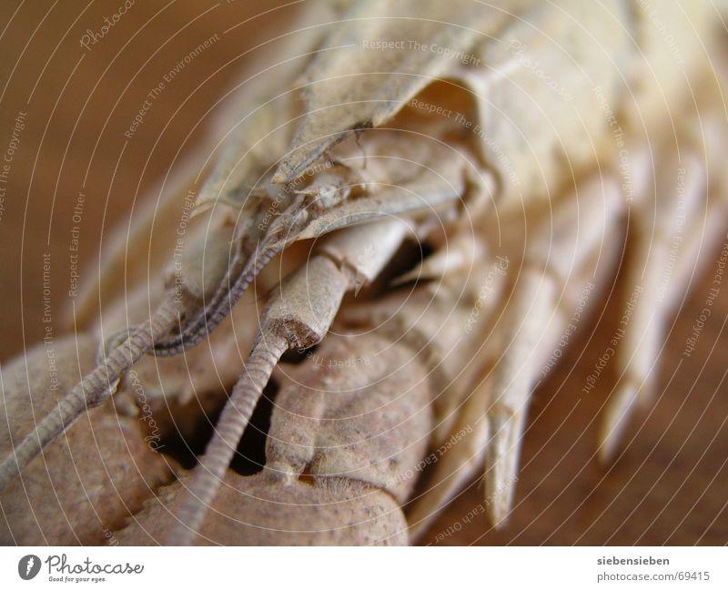 crayfish Crawfish Living thing Animal Underwater photo Crustacean Macro (Extreme close-up) Close-up River Brook Shellfish Water