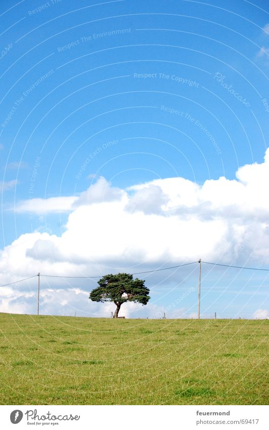 Hang the tree... Tree Meadow Field Summer Clouds Telephone line Horizon Landscape Lawn Sky Sun Electricity pylon Free skies race masts voice grade channel