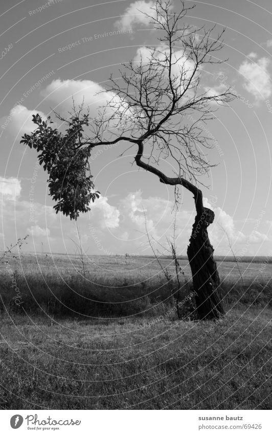 split up Tree Light Eerie Foreign Indecisive Plant Split Maturing time Black & white photo Nature Landscape Shadow black Divide Life Death Growth