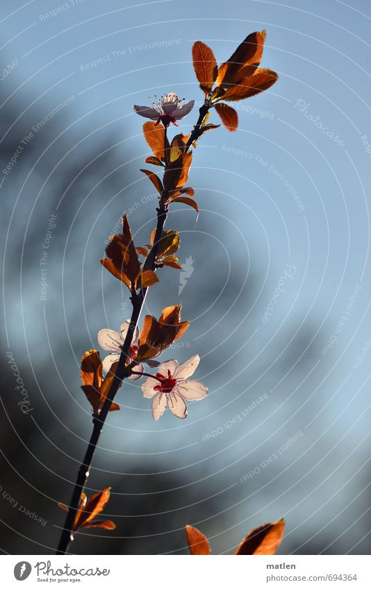 ave Nature Plant Sky Spring Beautiful weather Tree Leaf Blossom Deserted Blue Brown Pink White Beginning Twig Colour photo Subdued colour Day Shadow Back-light
