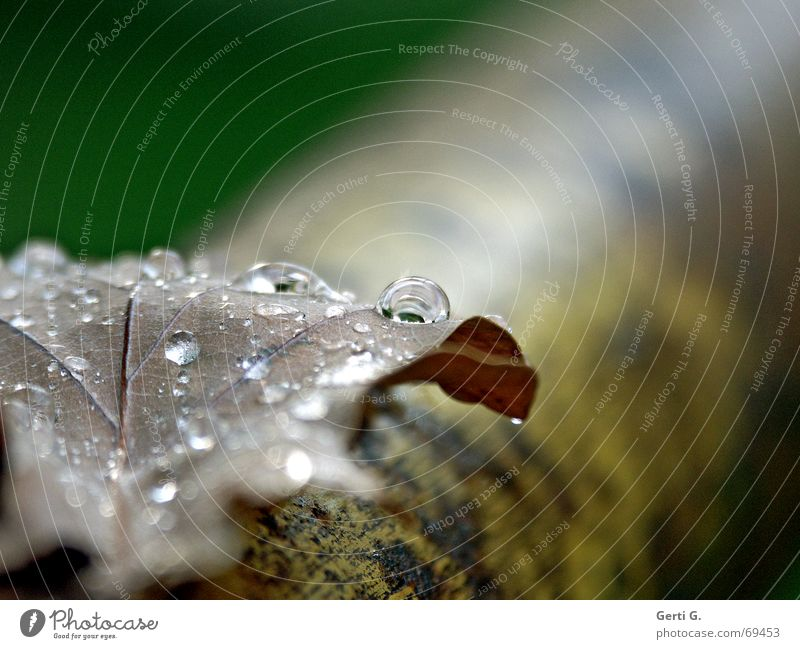 Tree Leaf Rain Drops of water Wet Dry Autumn leaves Tears Rod Evening sun