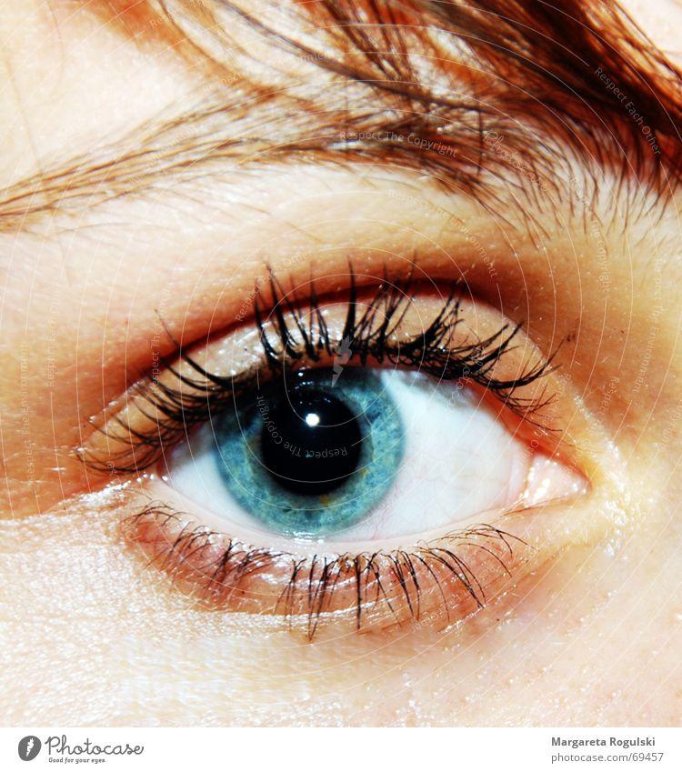 Blue Eyes Hair and hairstyles Eyelash Eyebrow Pupil Iris