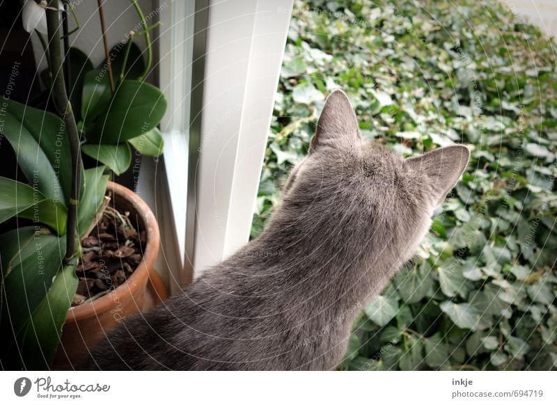 totally curious Lifestyle Leisure and hobbies Living or residing Flat (apartment) Spring Summer Ivy Orchid Garden Window Animal Pet Cat Pelt Cat's ears 1