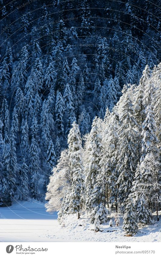 Vacation & Travel Blue Beautiful White Relaxation Landscape Calm Winter Forest Mountain Snow Happy Exceptional Lake Dream Contentment