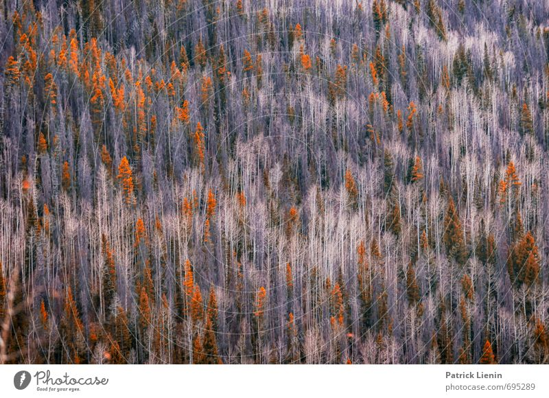 Forest in the Rockies Vacation & Travel Tourism Trip Adventure Freedom Environment Nature Landscape Autumn Climate Climate change Weather Plant Tree Mountain