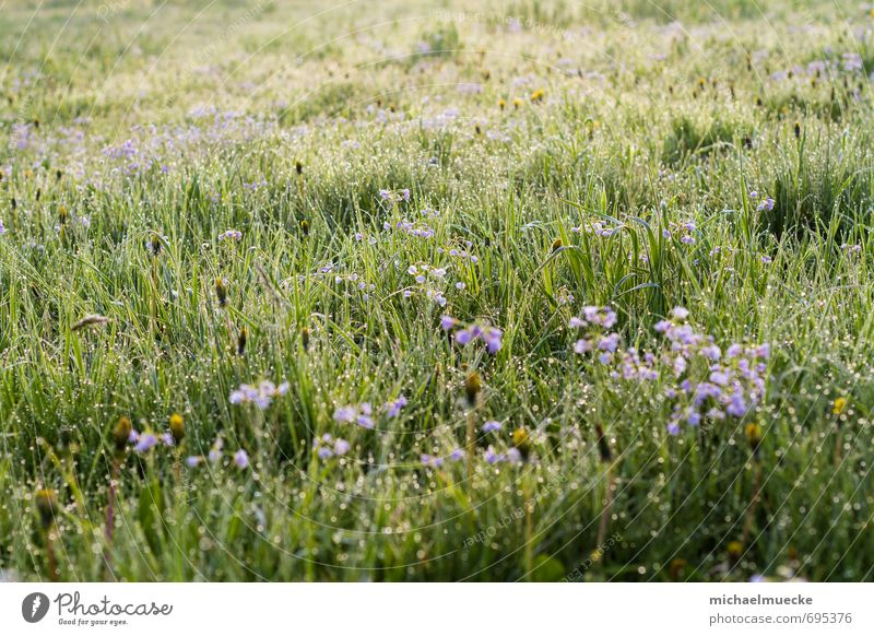 Meadow in the morning Harmonious Calm Nature Landscape Plant Spring Grass Blossom Foliage plant Field Blossoming Fresh Bright Positive Beautiful Green Moody