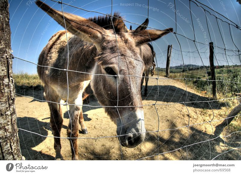 Nature Sky Vacation & Travel Animal Italy Fence HDR Tuscany Donkey