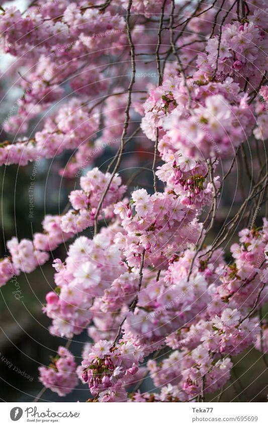 Spring 2 Design Life Summer Nature Plant Blossom Foliage plant Garden Park Jump Pink Joy Happy Happiness Contentment Joie de vivre (Vitality) Spring fever