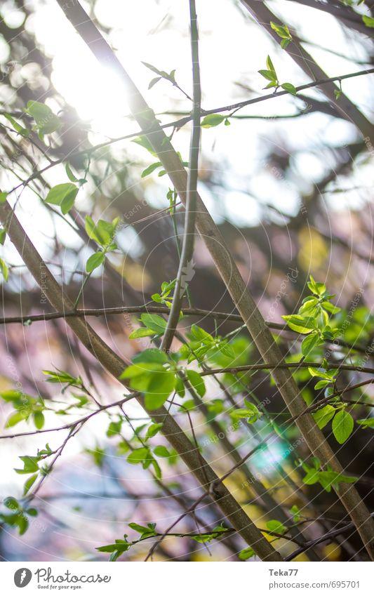 Nature Plant Summer Sun Leaf Joy Life Emotions Spring Happy Jump Garden Park Contentment Design Climate
