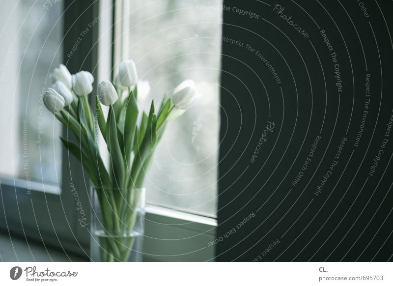 tulips always go Living or residing Flat (apartment) Decoration Room Flower Tulip Leaf Blossom Wall (barrier) Wall (building) Window Blossoming White Bouquet