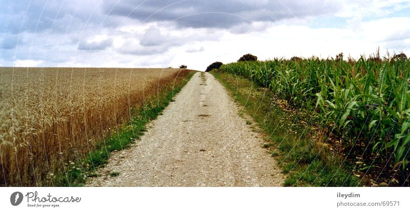 Four Clouds 4 Basic Crops Footpath Overland route Tracks Outward Grass In transit Horizon Panorama (View) Grain Lanes & trails Maize Sky Free Freedom