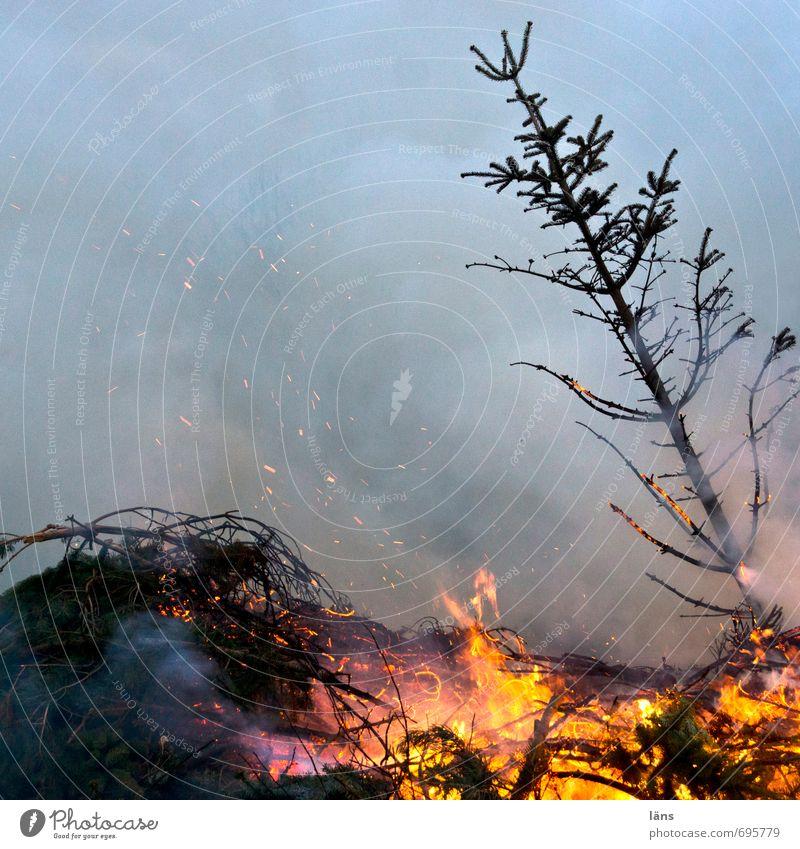 tinder Event Feasts & Celebrations Smoking Threat Problem solving Divide Blaze Burn Fir tree Smoke Spark Fireplace Christmas tree Colour photo Exterior shot