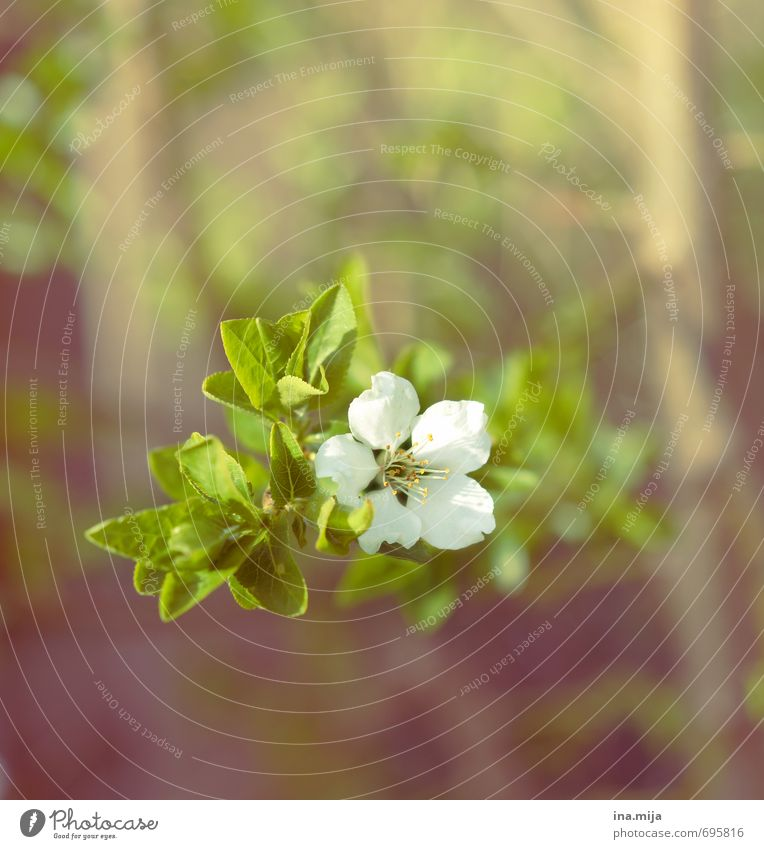 it springs Environment Nature Plant Spring Flower Blossom Agricultural crop Wild plant Garden Blossoming Blackthorn Living thing Berry bushes Bushes