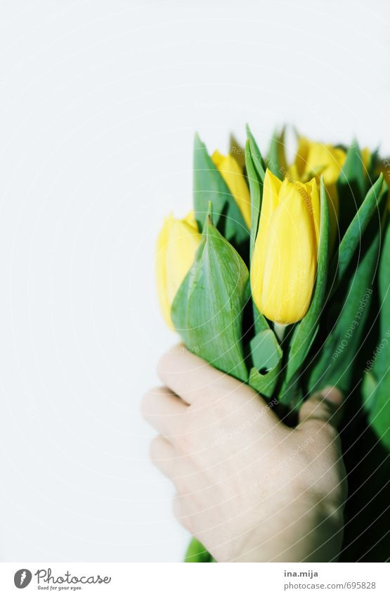 Happy birthday! Environment Nature Plant Spring Tulip Beautiful Yellow Green Bouquet Flower To hold on Donate Give Surprise Romance Valentine's Day