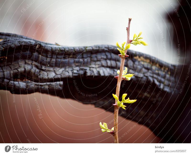 hope Nature Spring Summer Plant Tree Shoot Branch Growth Esthetic Fresh Original Power Trust Endurance Beginning Hope Life Joie de vivre (Vitality) Survive