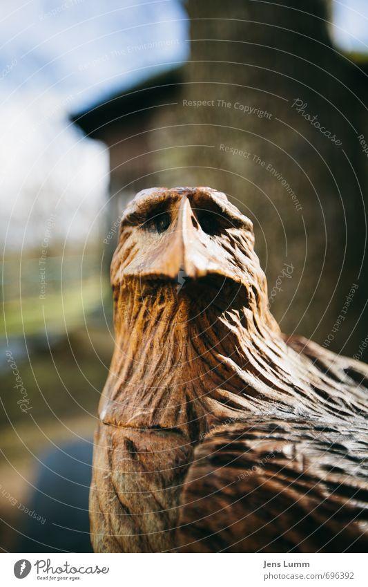 Wood Brown Federal eagle Figure Eagle Perplexed