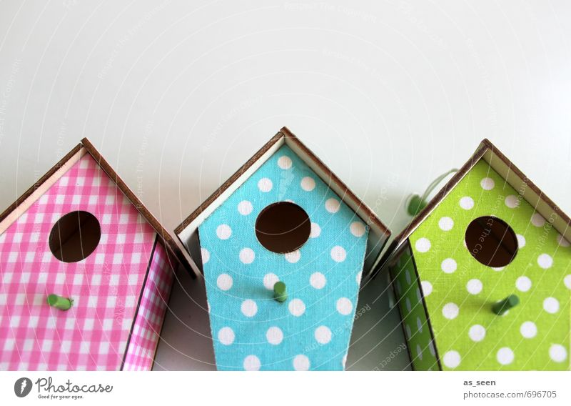 City Green White Summer Joy House (Residential Structure) Architecture Spring Wood Garden Flying Bright Bird Pink Leisure and hobbies Design
