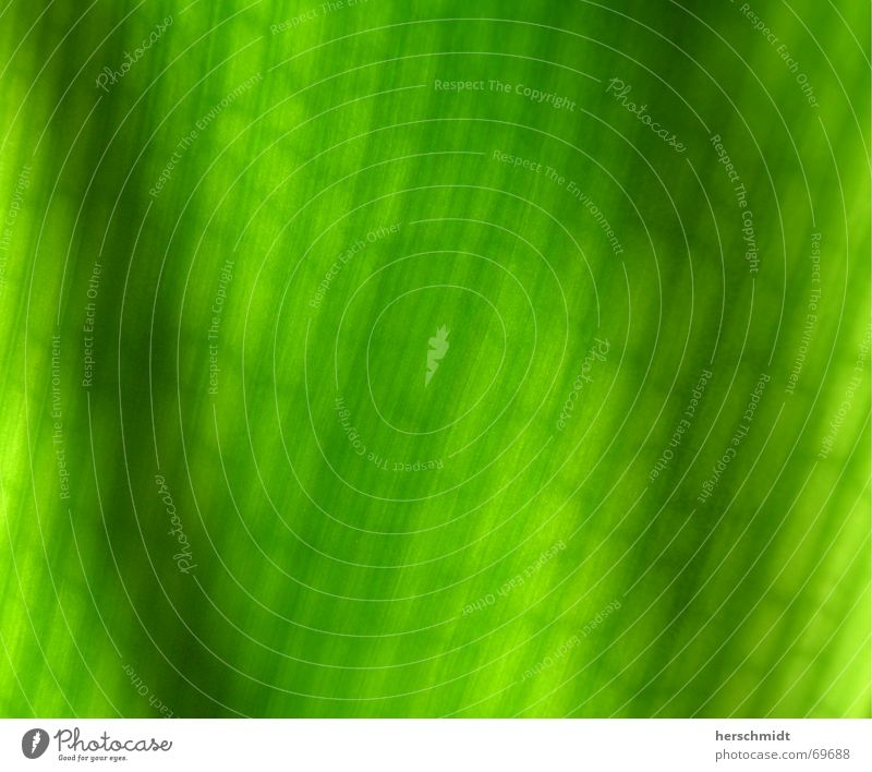 cellular structure Green Leaf Construction Light Stripe Photosynthesis Synthesis Sunlight Sunrise Morning Structures and shapes layering Classification Shadow