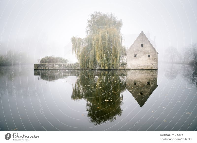 Nature Green Water Tree Loneliness Landscape Calm Far-off places Lake Bright Moody Germany Weather Fog Mysterious Body of water