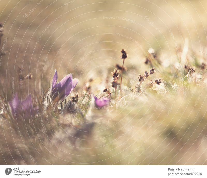 Nature Plant Landscape Environment Meadow Spring Grass Blossom Natural Exceptional Wild Esthetic Beautiful weather Threat Blossoming Discover