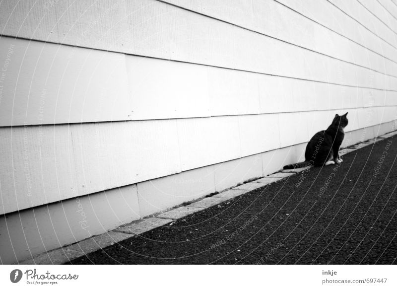 loner Building Wall (barrier) Wall (building) Facade Street Lanes & trails Animal Pet Cat 1 Line Stripe Crouch Looking Wait Gloomy Town Black White Emotions