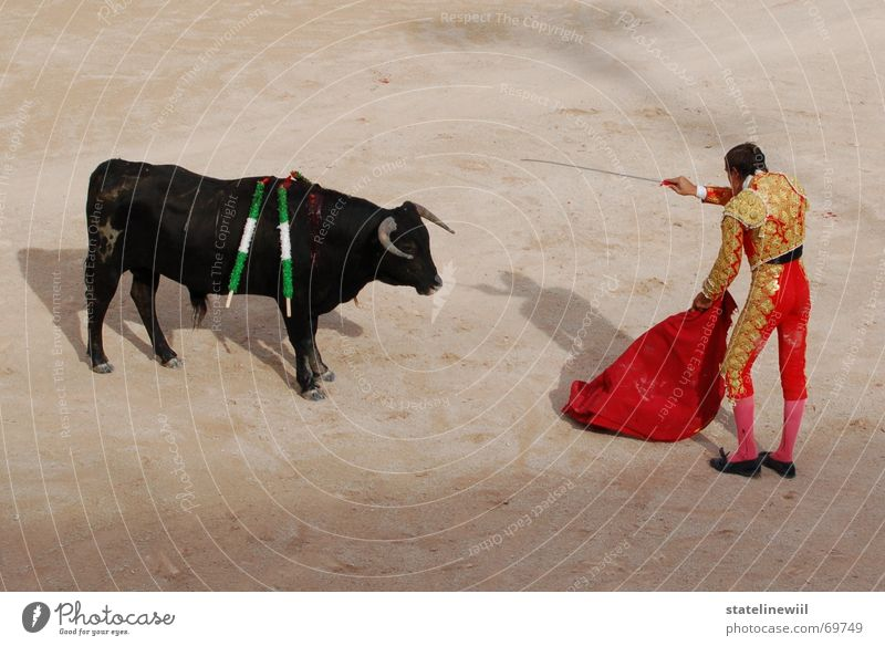 dagger-pounding legend Bullfight Bullfighter Red Spain France Arles Stadium Tradition Provence Brutal Strong Cattle Brave Dangerous Exterior shot Kill Pierce