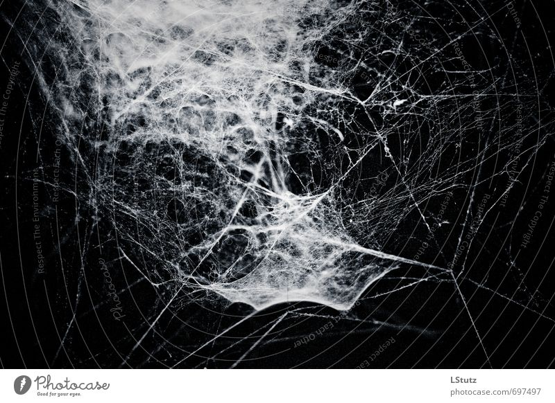 spiders web . 02 Nature Spider Esthetic Threat Dark Creepy Blue Gray Black White Fear Fear of death Cold Surrealism Symmetry Spider's web Colour photo
