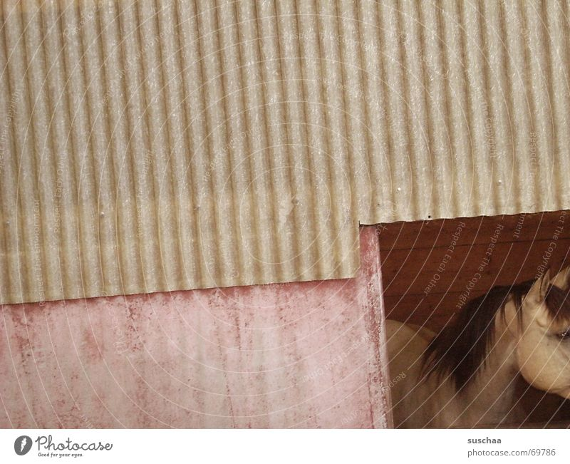 Wall (building) Horse Vantage point Americas Barn Corrugated sheet iron Country life