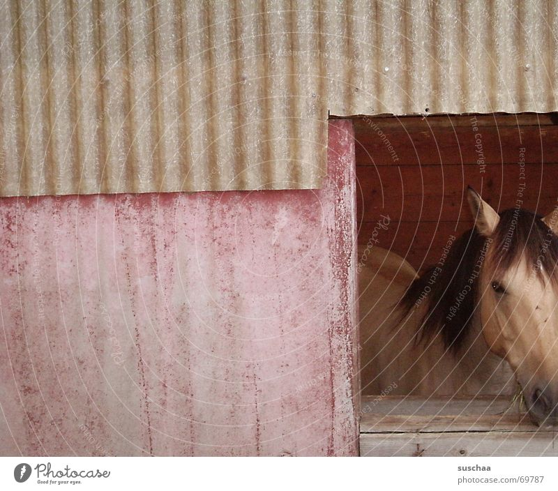 Wall (building) Window Horse Vantage point Animal Barn Horse's head