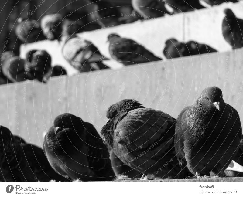 Animal Relaxation Bird Dirty Stairs Europe Pigeon Milan
