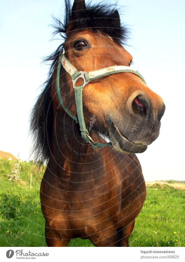 little horse Horse Halter Goggle eyes Meadow Mane Sky Looking Eyes