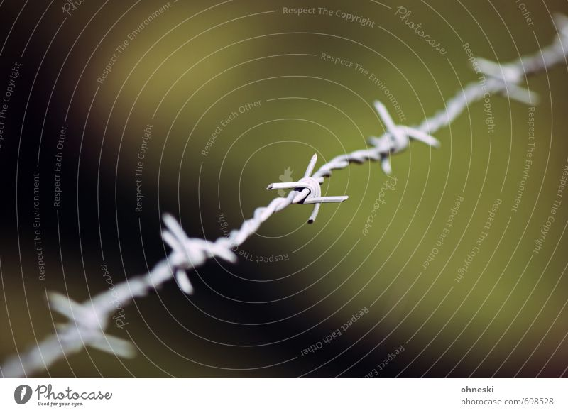The Wire Barbed wire Fence Knot Green Bans Border Colour photo Exterior shot Deserted Copy Space top Copy Space bottom Day Shallow depth of field