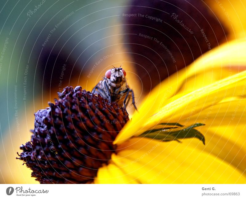 it's a fly Insect Relaxation Sleep Flower Animal Yellow Blossom Blossom leave Sunhat Fly Bud Nature background blur Flying
