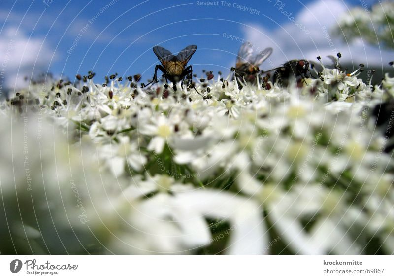 Flower Plant Summer Blossom Fly Insect Collection Calculation Sprinkle