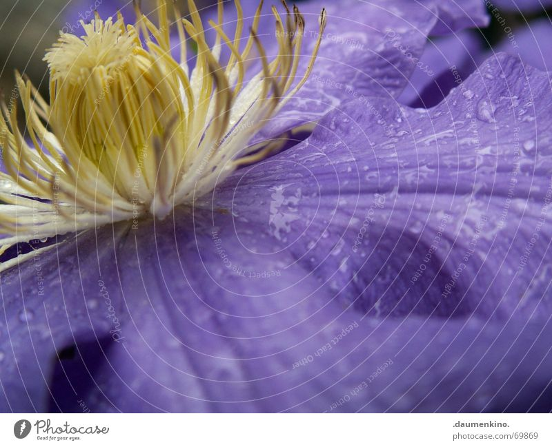 Flower Plant Blossom Drops of water Wet Bud