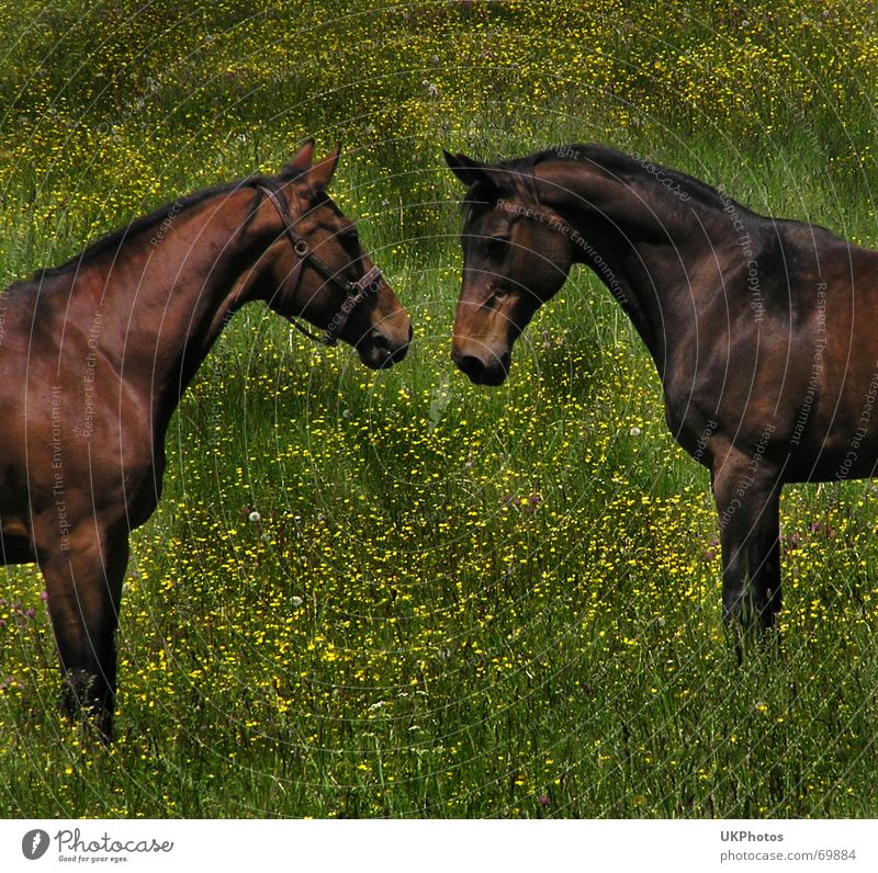 Nature Love Animal Meadow Friendship Horse Pasture Harmonious