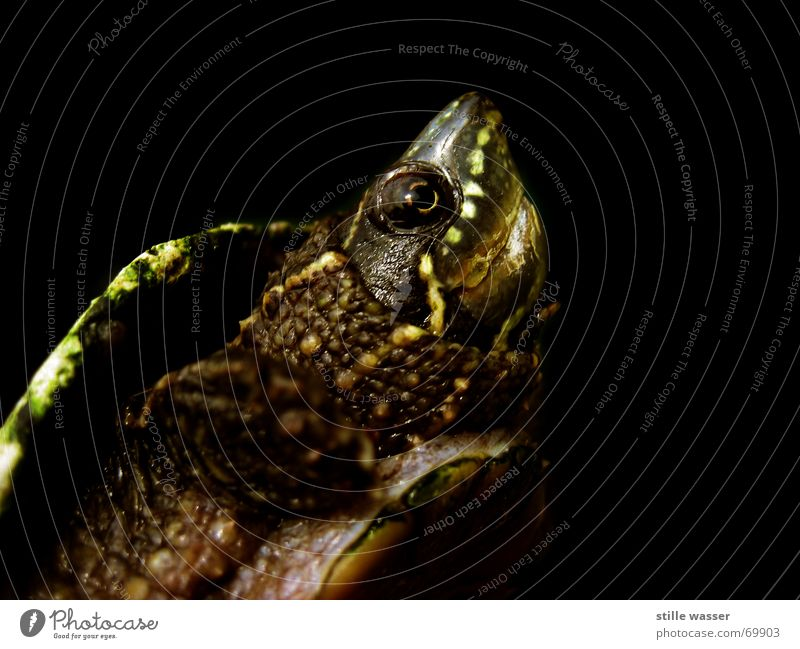 turtle Turtle Claw Snout Reptiles Turles Armor-plated Barn Eyes Breastplate armoured backrest