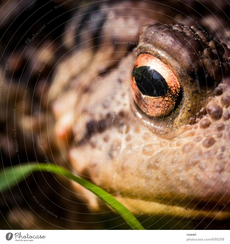 Kiss! Me! Garden Environment Nature Animal Spring Summer Climate Blade of grass Wild animal Frog Toad Painted frog Animal face Eyes Muzzle Hide 1 Observe