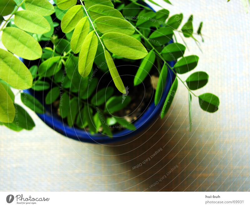 Nature Blue Green Plant Summer Window Life Earth Air Healthy Fresh Breathe Seed Pot Root Subsoil