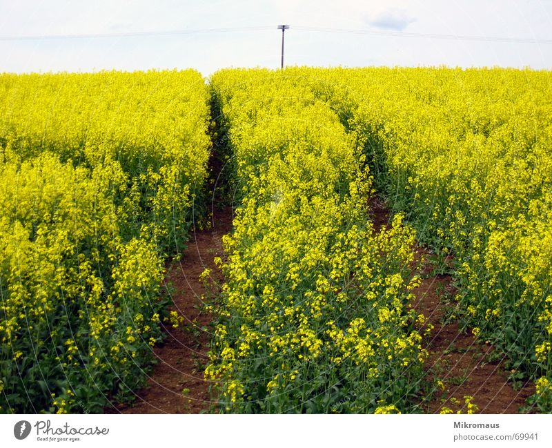 Green Summer Vacation & Travel Yellow Grass Warmth Field Happiness Physics Tracks Real estate Canola Tractor Skid marks Working in the fields Confusing
